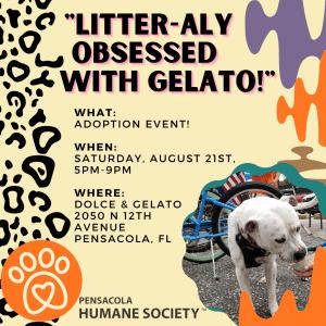 Dolce & Gelato August Event